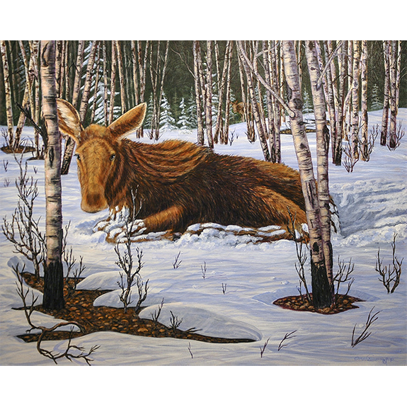 Yearling Moose - Original